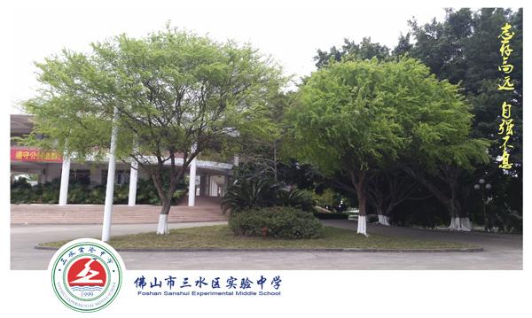 绿树.jpg