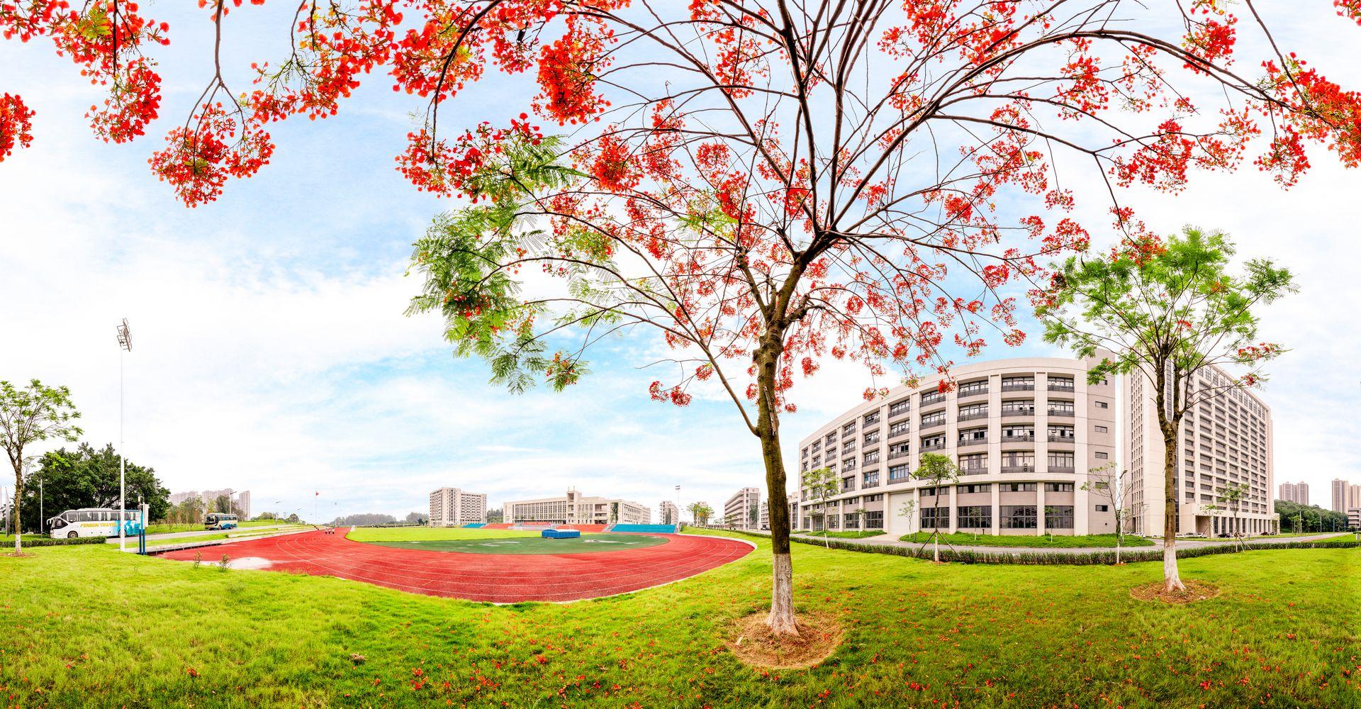 校园五月的凤凰树