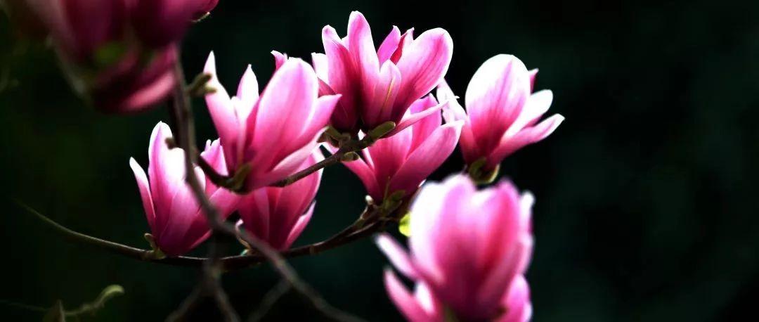 巨全春色美——王亚西校长眼中的春色