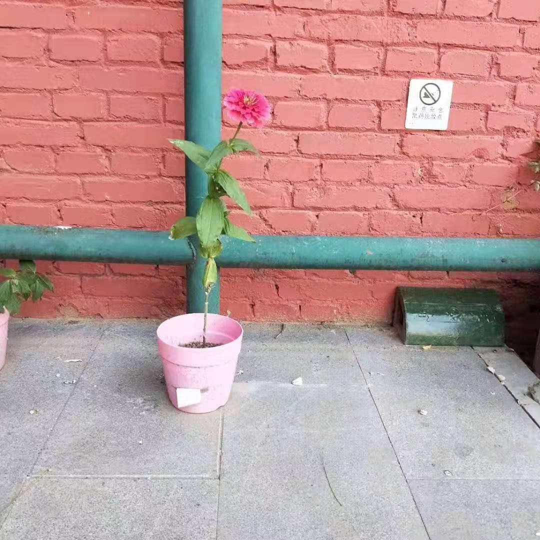 植物在校园中生长.jpg