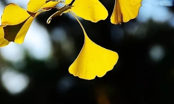 国藩情怀|花开了